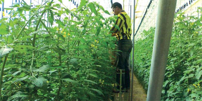 phytosanitaires-096.jpg