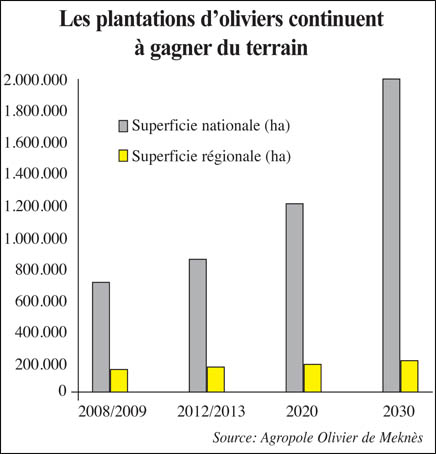 plantation_oliviers_049.jpg