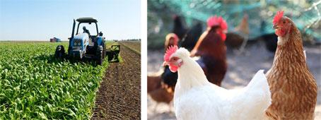 poulets-046.jpg