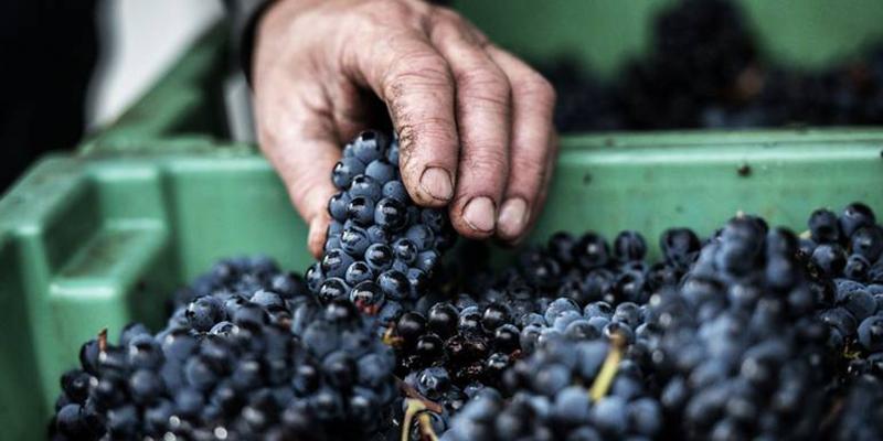 production_viticole_trt.jpg