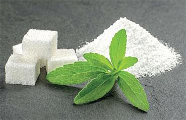 stevia-mogador-2-01.jpg
