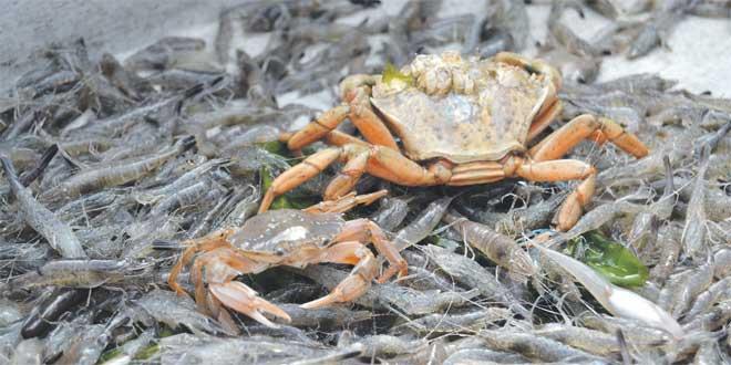 valorisation-dechet-crabe-crevette-054.jpg