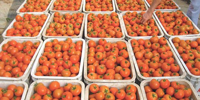 Tomates: Les exportations marocains vers l'UE dépassent le quota autorisé
