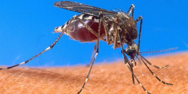 ETUDE-Etranges cas de paludisme chez des marocains en Italie