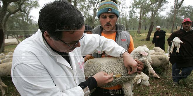 La CIMR s'accorde avec les vétérinaires